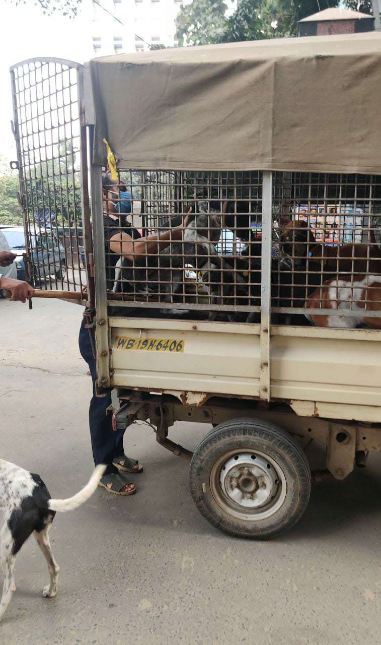 Dogs being sent for sterilization