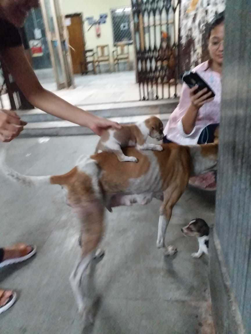 Malnourished mother dog with her litter