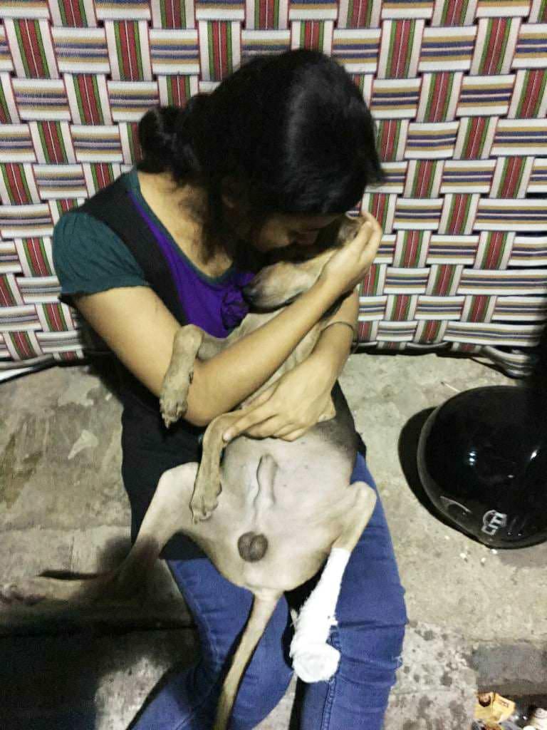 A pup with an injured limb